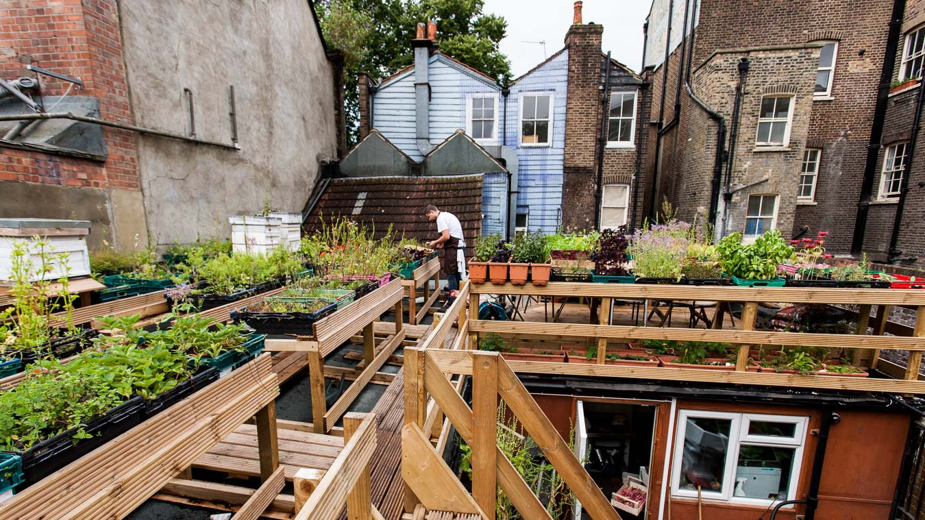 A rooftop garden scene with rows of raised herb beds. A chef, Robin Gill, can be seen collecting herbs surrounded by the backs of the surrounding buildings